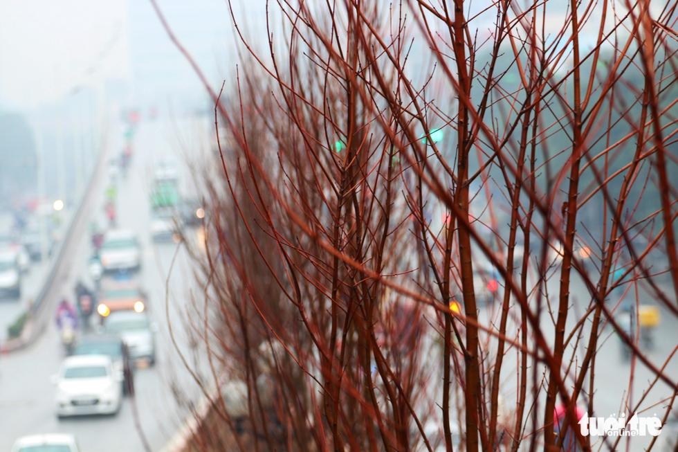 Trồng hàng trăm cây phong lá đỏ trên đường phố Hà Nội - Ảnh 4.