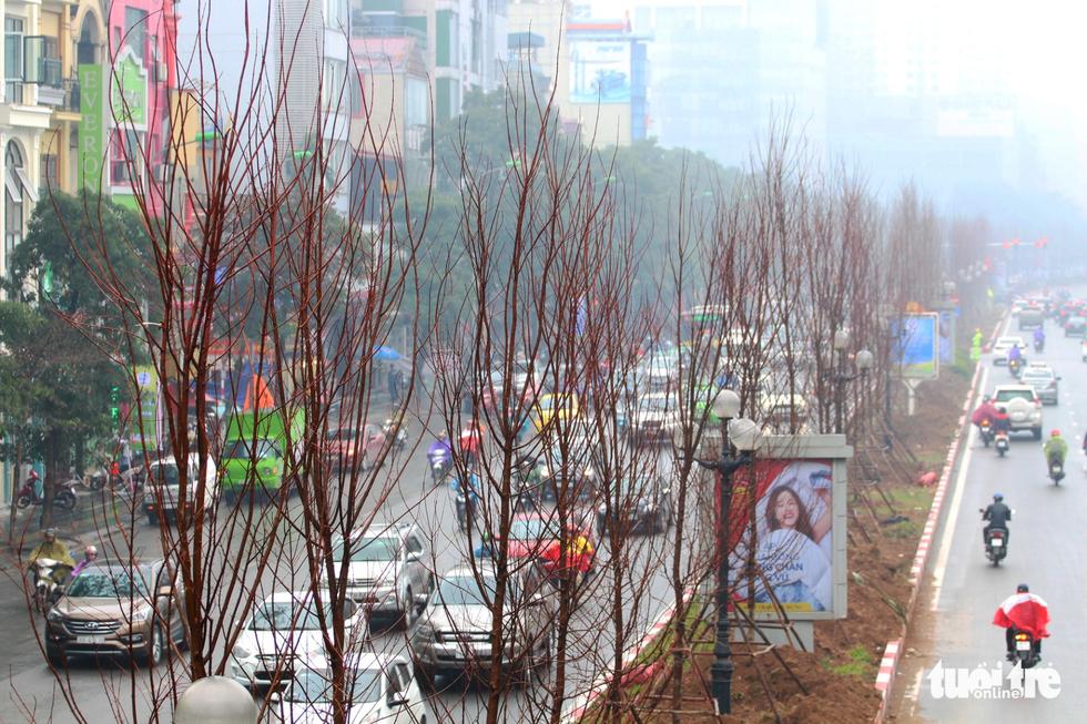Trồng hàng trăm cây phong lá đỏ trên đường phố Hà Nội - Ảnh 5.