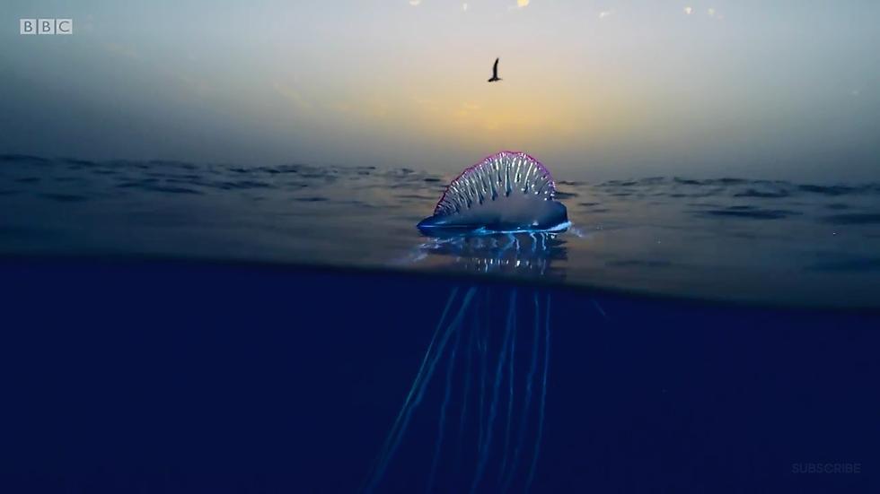 Xem Blue Planet II và ngắm những điều kỳ diệu dưới con sóng - Ảnh 23.