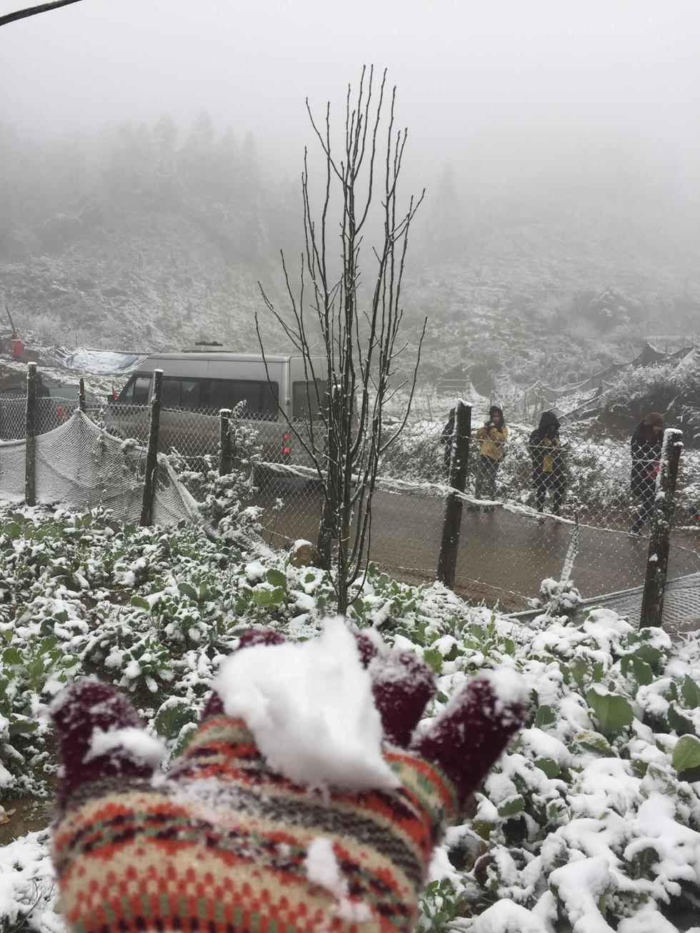 Chùm ảnh tuyết rơi trắng trời Sa Pa - Ảnh 18.