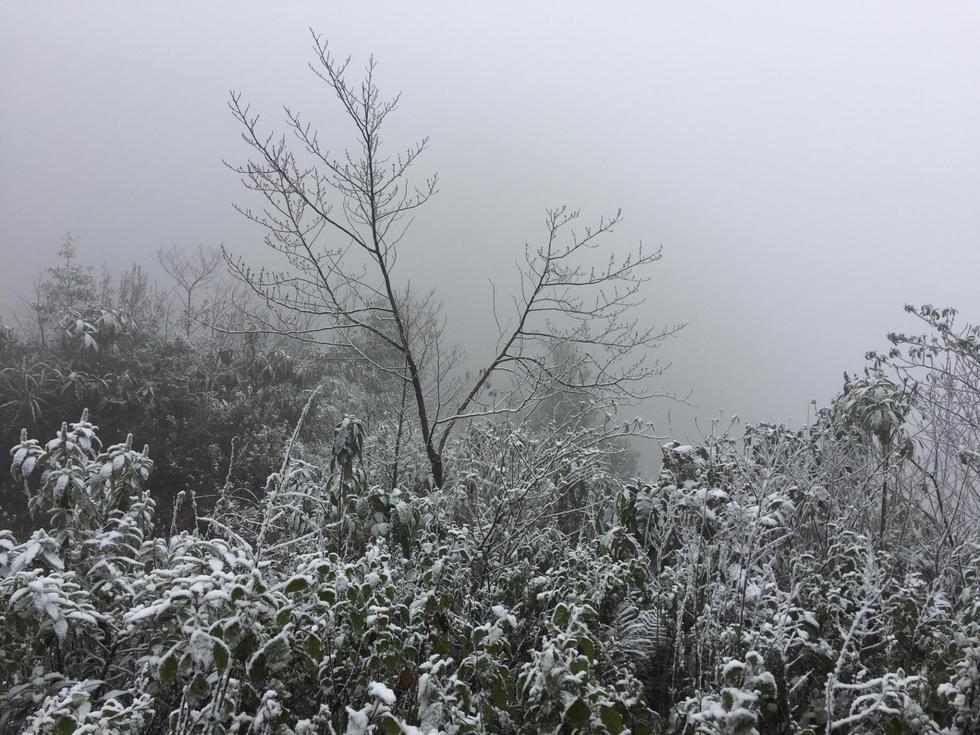 Chùm ảnh tuyết rơi trắng trời Sa Pa - Ảnh 15.
