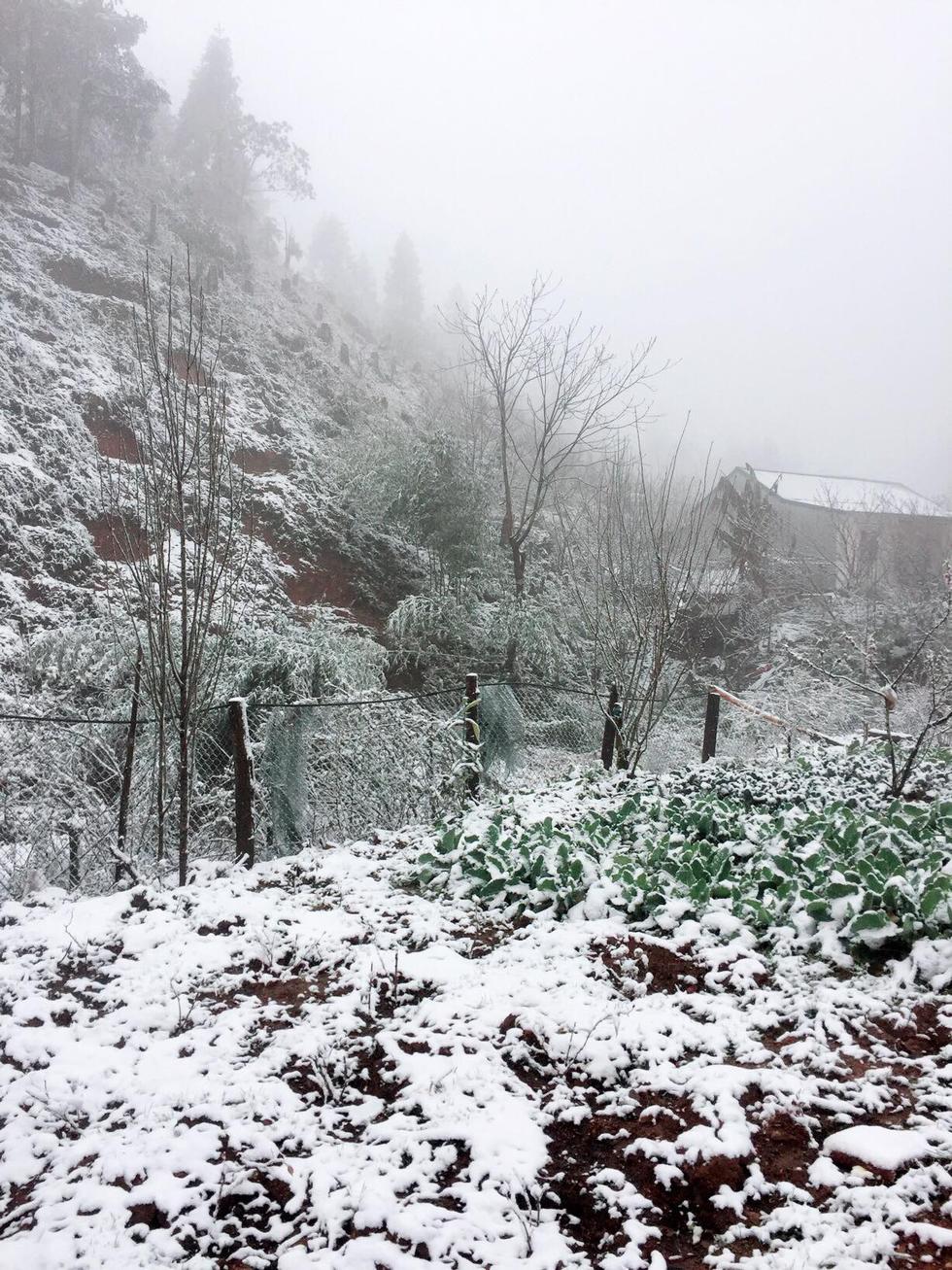 Chùm ảnh tuyết rơi trắng trời Sa Pa - Ảnh 16.