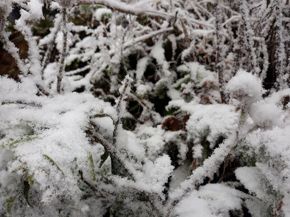 Chùm ảnh tuyết rơi trắng trời Sa Pa - Ảnh 6.