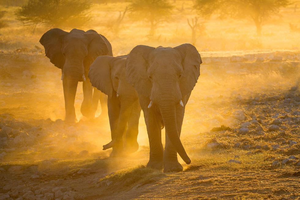 Sắc màu hoang dã Namibia - Ảnh 8.