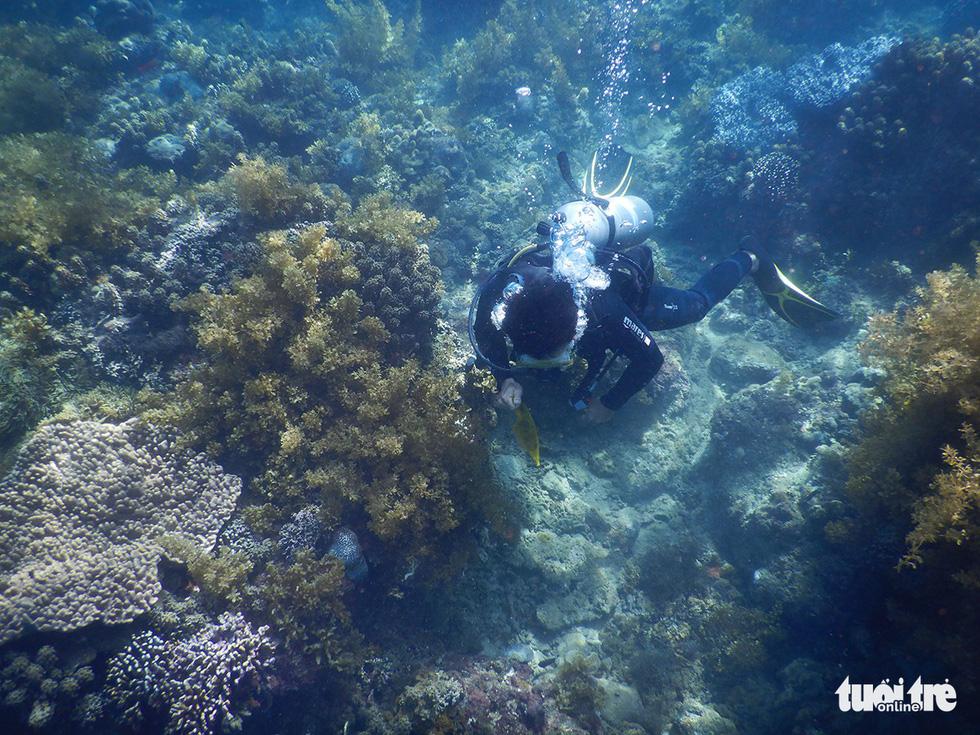 Nữ kiểm lâm dưới đáy biển - Ảnh 4.