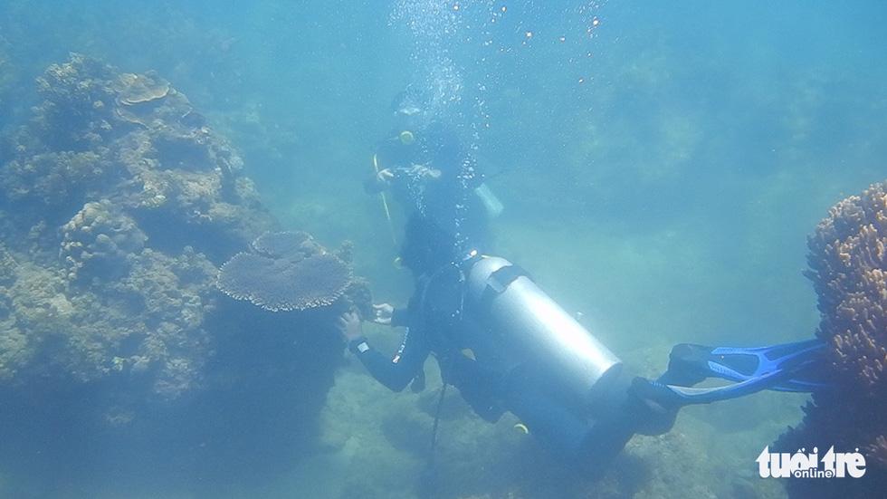 Nữ kiểm lâm dưới đáy biển - Ảnh 9.