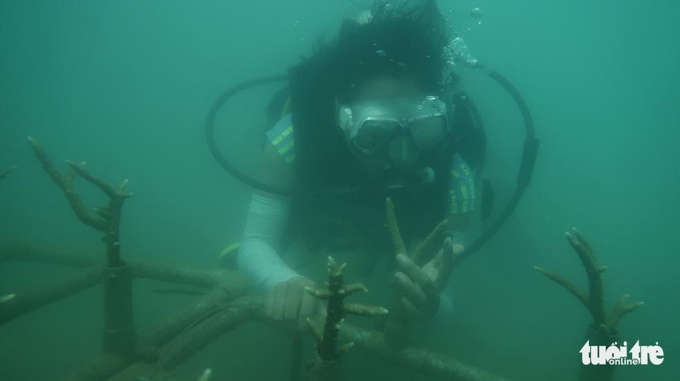 Nữ kiểm lâm dưới đáy biển - Ảnh 8.