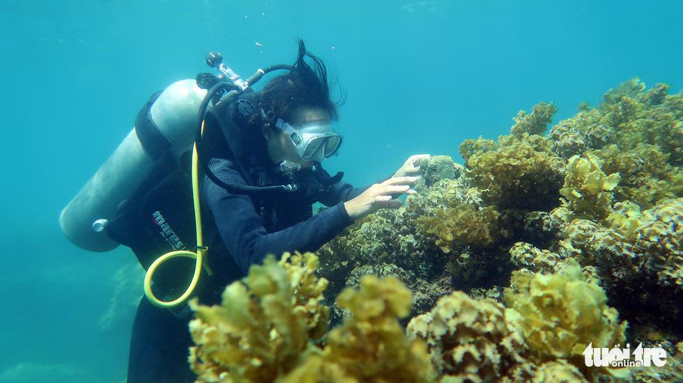 Nữ kiểm lâm dưới đáy biển - Ảnh 6.
