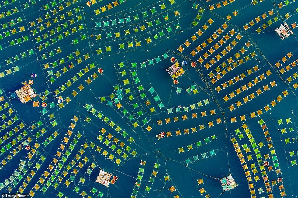 Hoa lưới tại Phú Yên đoạt giải nhì cuộc thi ảnh flycam quốc tế - Ảnh 2.