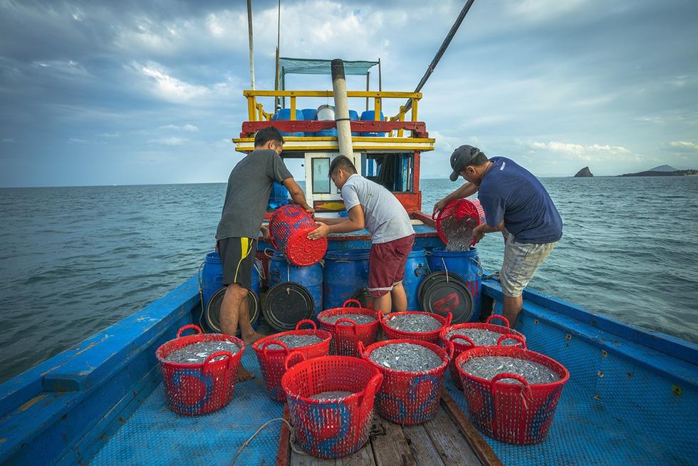 Vũ điệu ra khơi ở Hòn Yến mùa săn cá cơm ngần - Ảnh 10.