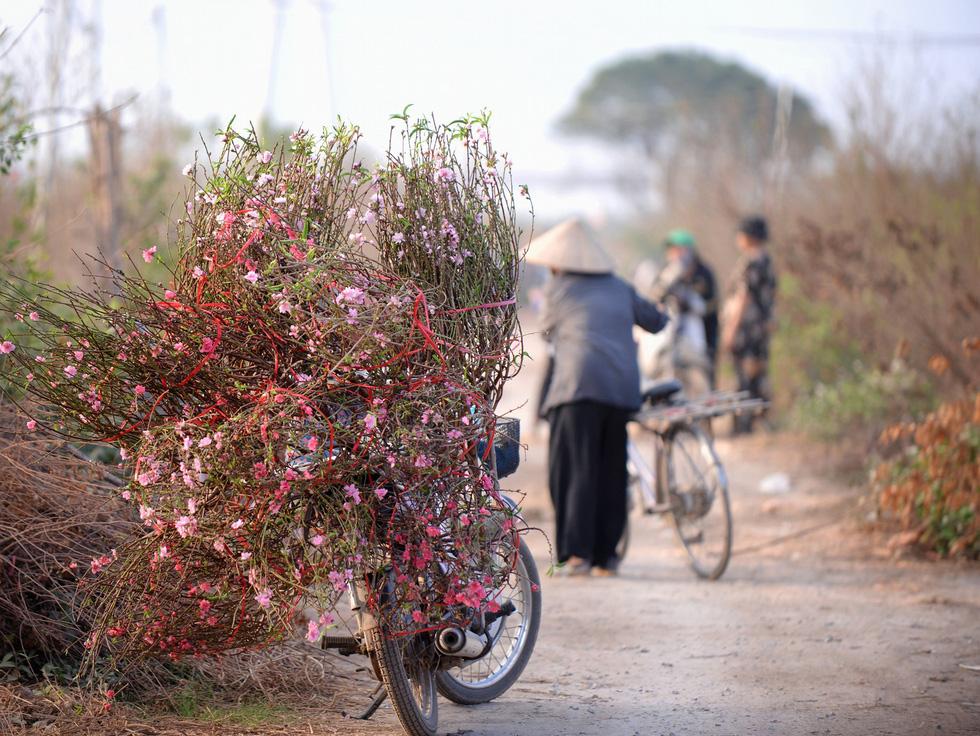 Vườn đào Nhật Tân rực sắc hồng đón Tết - Ảnh 7.