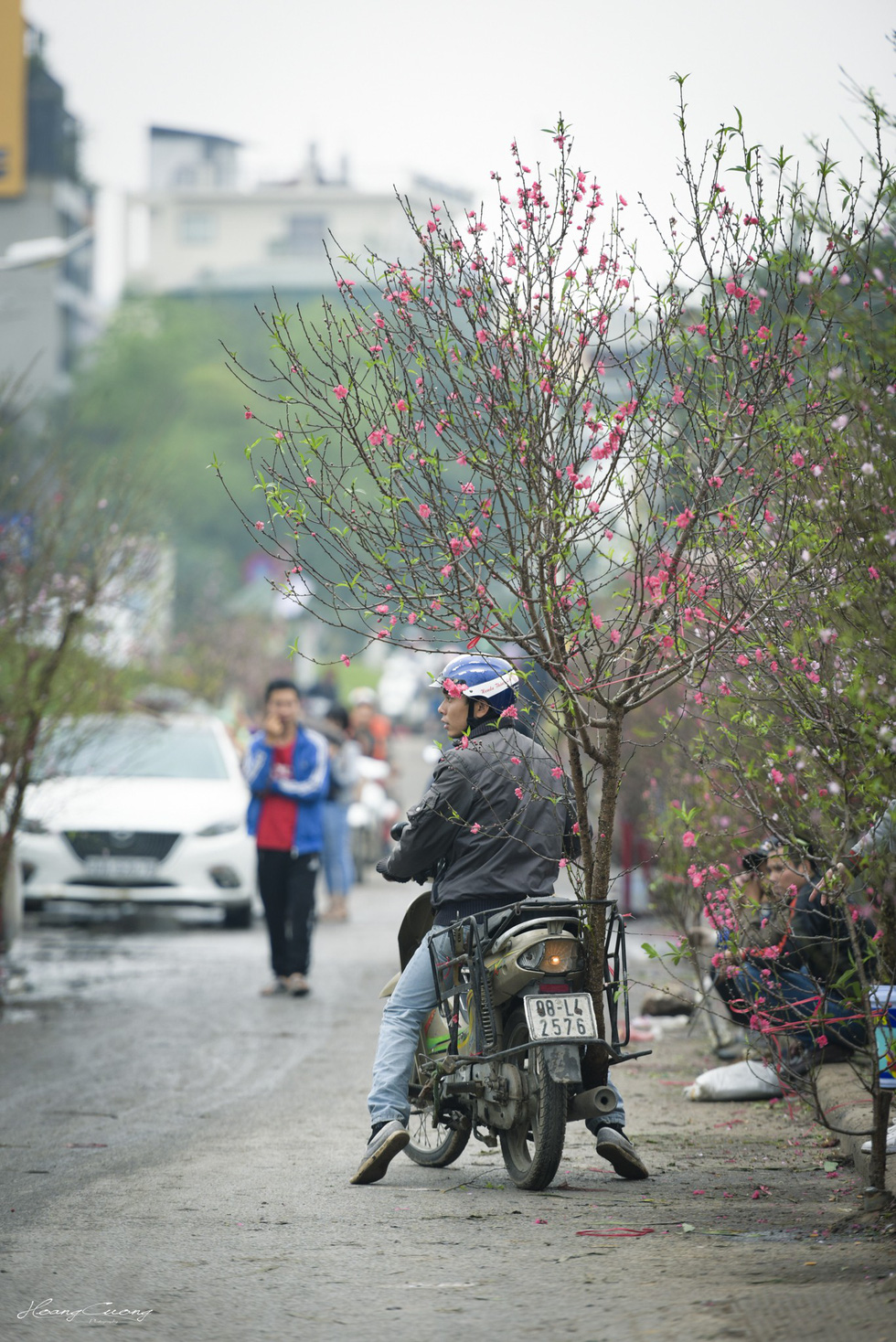 Vườn đào Nhật Tân rực sắc hồng đón Tết - Ảnh 8.