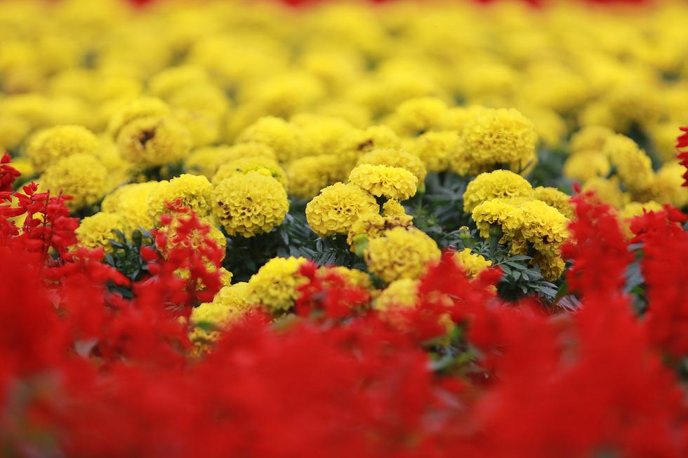 Cup ngàn hoa khổng lồ cổ vũ đội tuyển Việt Nam - Ảnh 3.