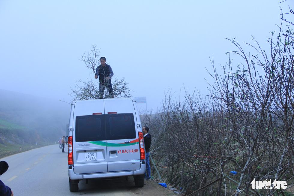 Đổ xô săn hoa đào, hoa mận núi rừng Tây Bắc - Ảnh 7.