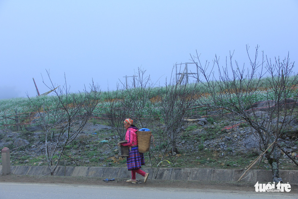 Đổ xô săn hoa đào, hoa mận núi rừng Tây Bắc - Ảnh 9.