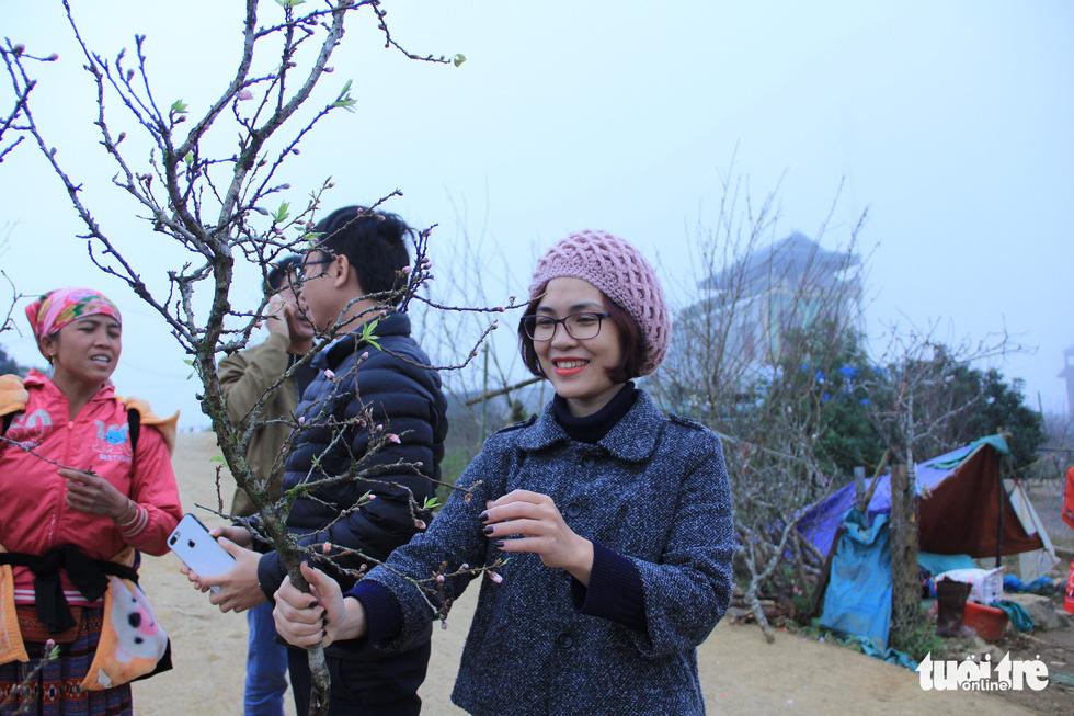 Đổ xô săn hoa đào, hoa mận núi rừng Tây Bắc - Ảnh 1.
