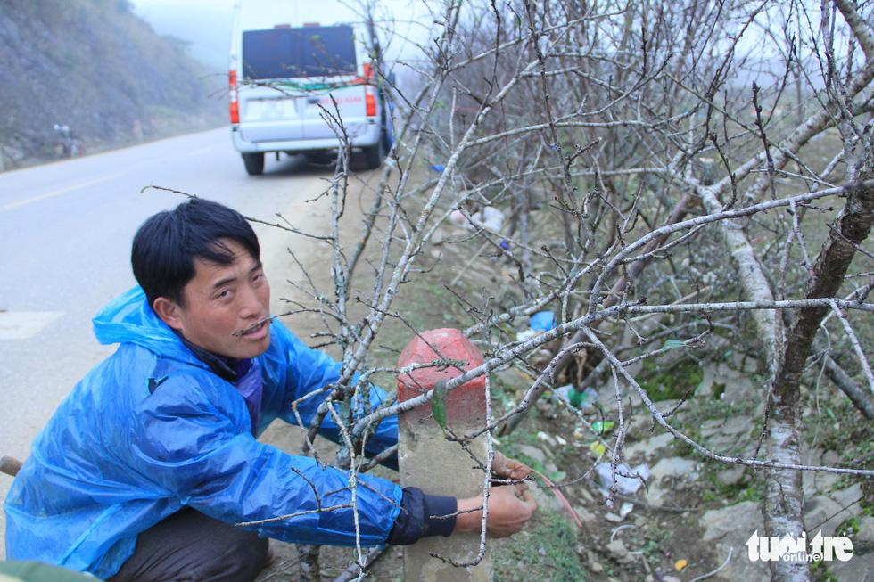 Đổ xô săn hoa đào, hoa mận núi rừng Tây Bắc - Ảnh 6.