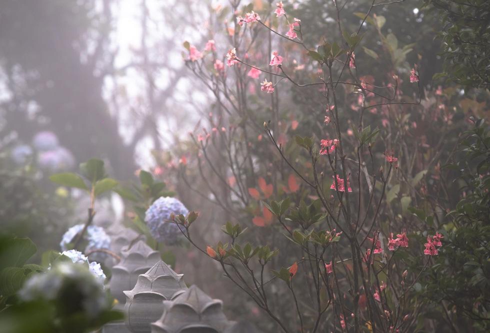 Ngất ngây mùa hoa đào chuông trên đỉnh Bà Nà - Ảnh 1.