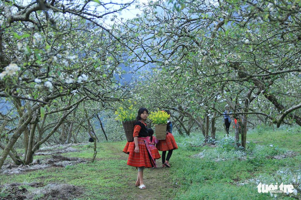 Say đắm với Mộc Châu mùa hoa mận nở trắng trời trắng đất - Ảnh 8.