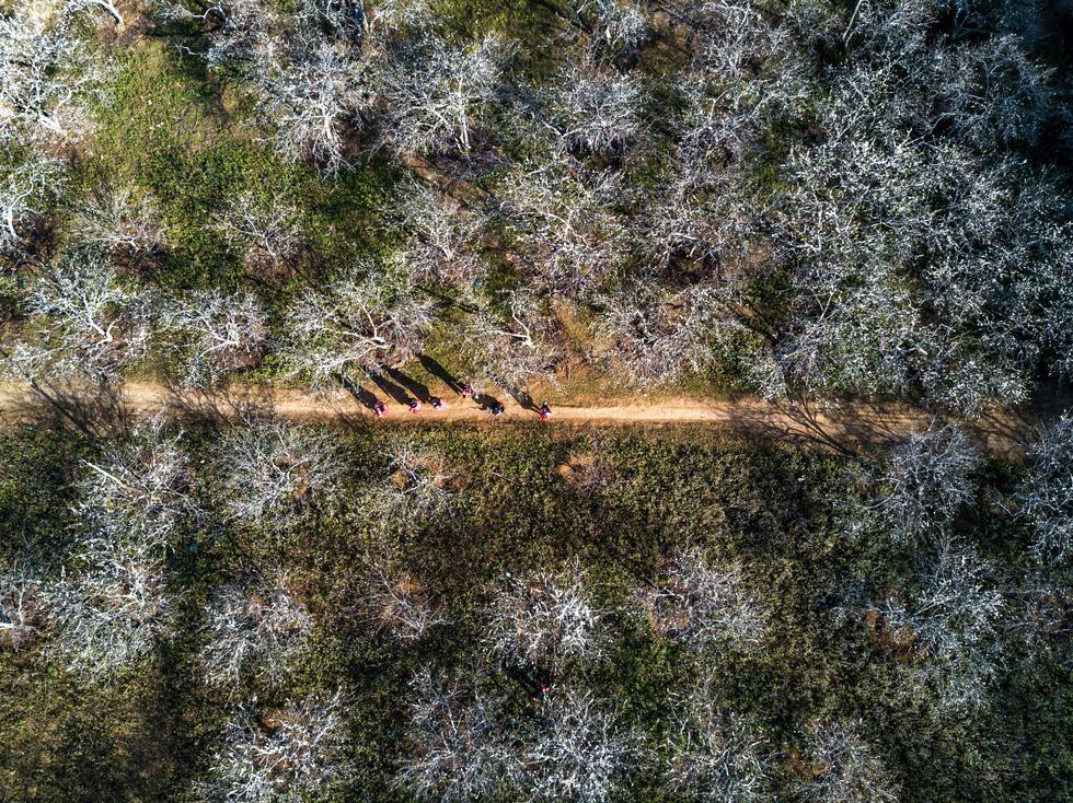 Mùa hoa mận trắng của người Mông bản Phiêng Cành - Ảnh 1.