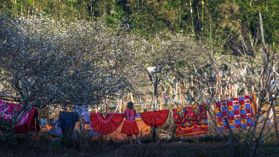 Mùa hoa mận trắng của người Mông bản Phiêng Cành - Ảnh 7.