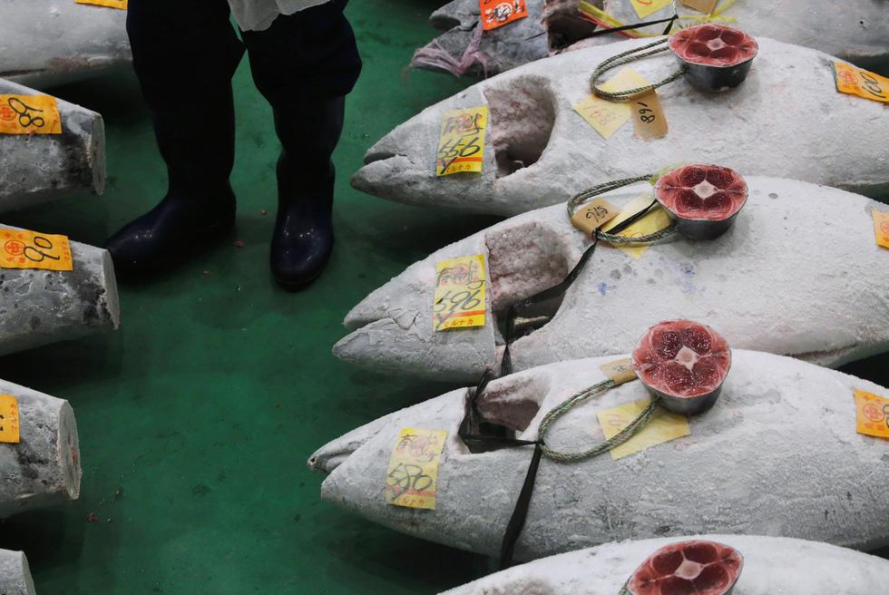 Cả thế giới choáng với 260 triệu đồng mỗi ký cá ngừ - Ảnh 4.