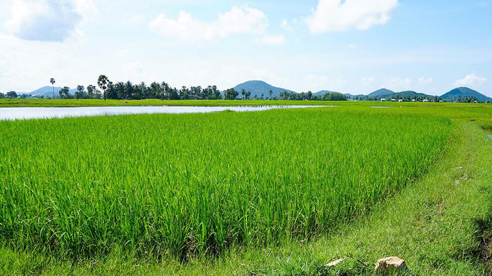 Hà Tiên, thành phố của những cánh đồng xanh - Ảnh 2.