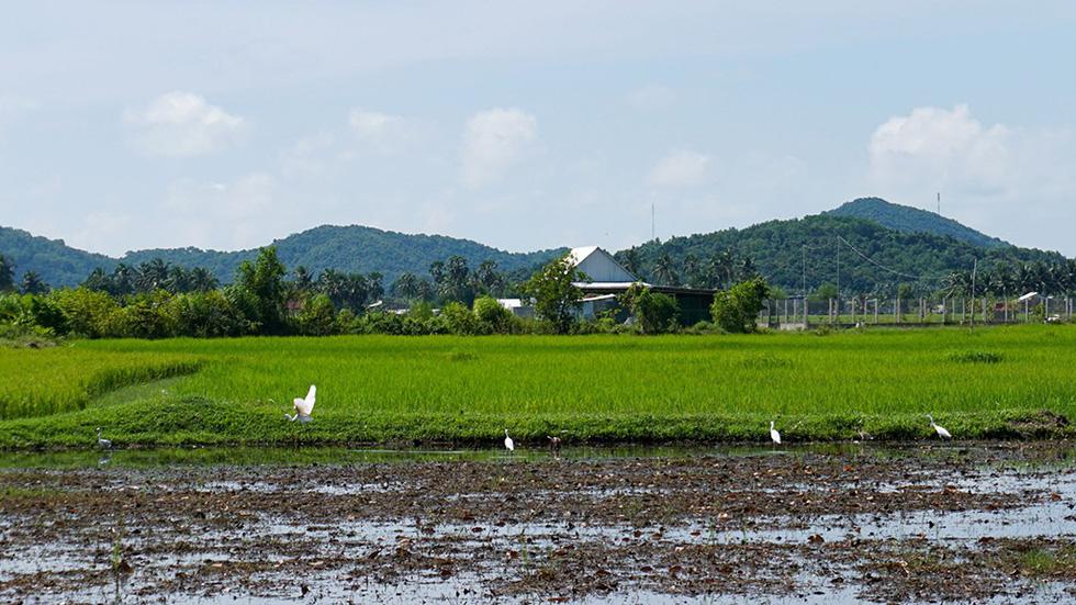 Hà Tiên, thành phố của những cánh đồng xanh - Ảnh 4.
