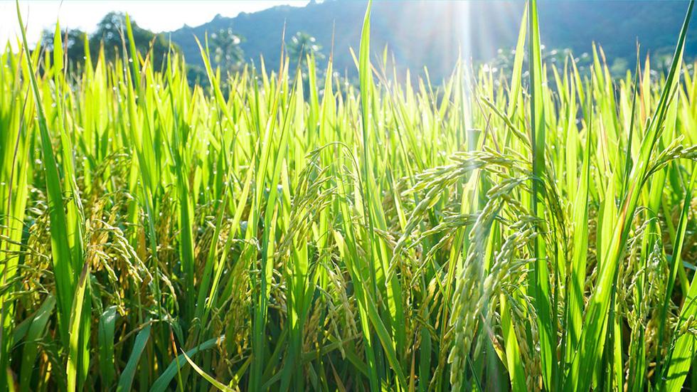 Hà Tiên, thành phố của những cánh đồng xanh - Ảnh 8.