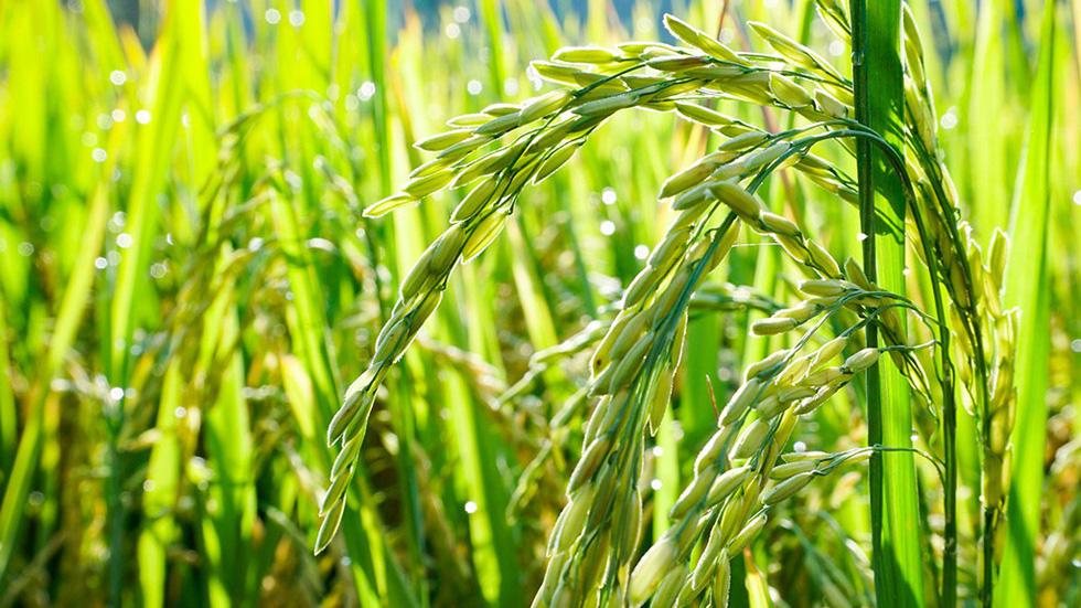 Hà Tiên, thành phố của những cánh đồng xanh - Ảnh 9.
