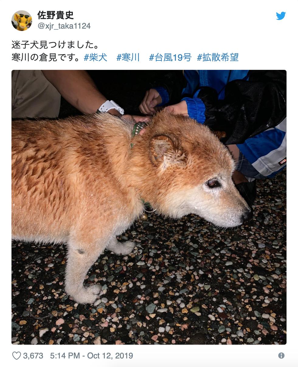 Người già, người trẻ Nhật không ai than khóc với thảm họa Hagibis - Ảnh 12.