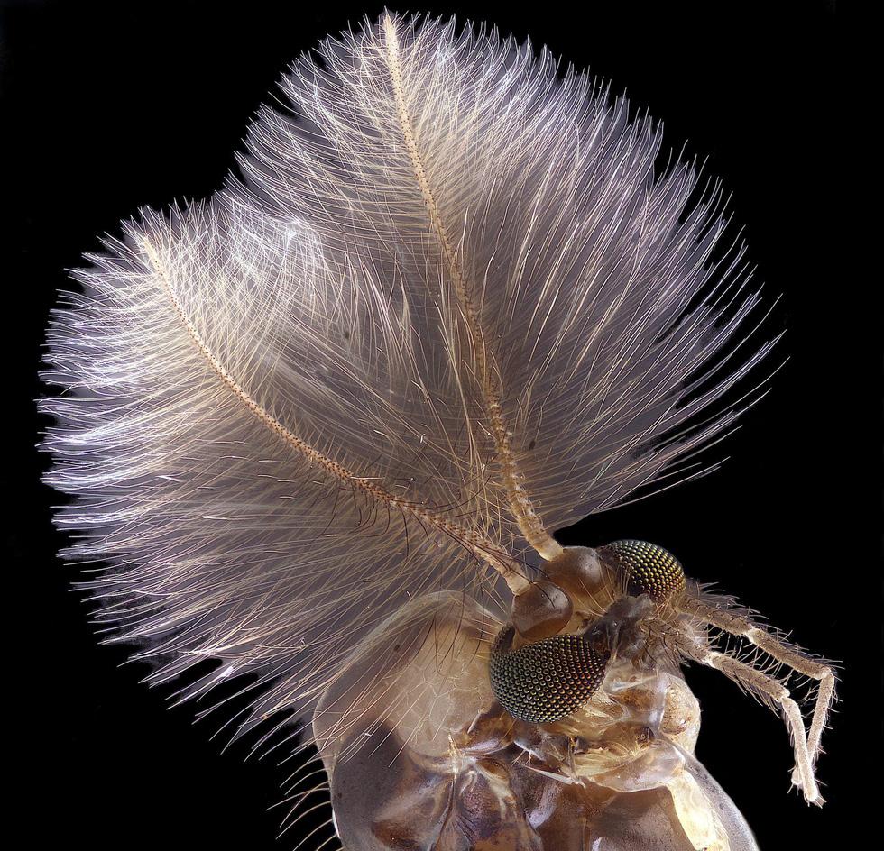 Ngỡ ngàng vẻ đẹp của phôi thai rùa, cá sấu dưới kính hiển vi - Ảnh 4.