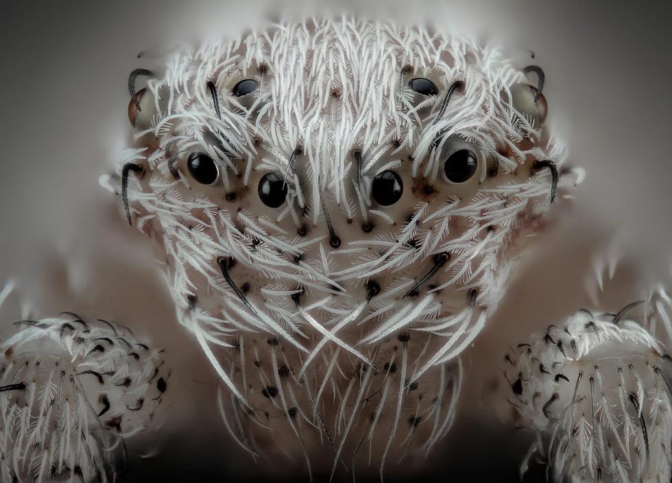 Ngỡ ngàng vẻ đẹp của phôi thai rùa, cá sấu dưới kính hiển vi - Ảnh 6.