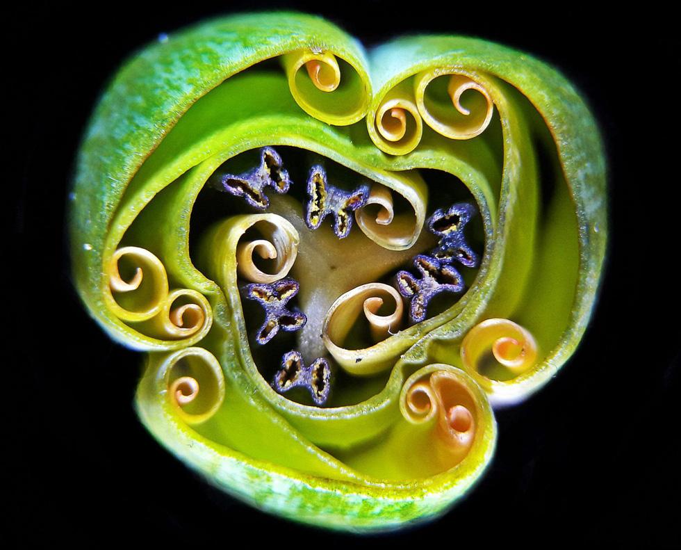 Ngỡ ngàng vẻ đẹp của phôi thai rùa, cá sấu dưới kính hiển vi - Ảnh 9.