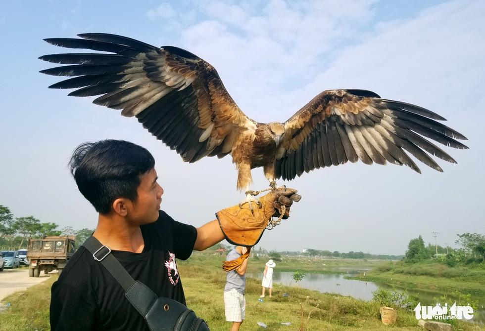 Mãn nhãn với những chú chim săn mồi sải cánh dũng mãnh - Ảnh 1.