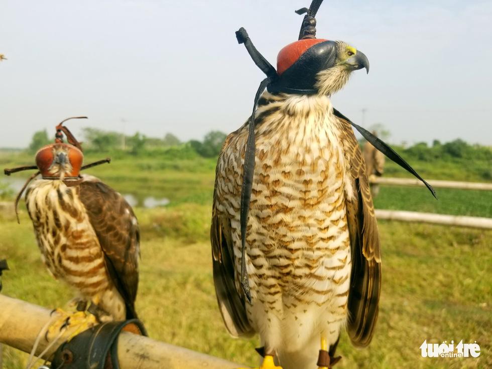Mãn nhãn với những chú chim săn mồi sải cánh dũng mãnh - Ảnh 8.