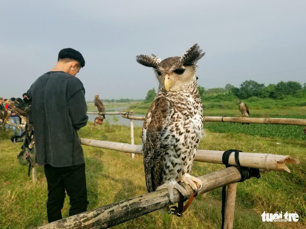 Mãn nhãn với những chú chim săn mồi sải cánh dũng mãnh - Ảnh 10.