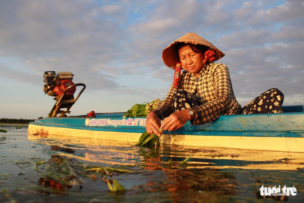 Cô Huỳnh Thị Hiền (52 tuổi, Mộc Hóa, Long An) rửa sạch hẹ để kịp giao cho thương lái - Ảnh: NGỌC PHƯỢNG