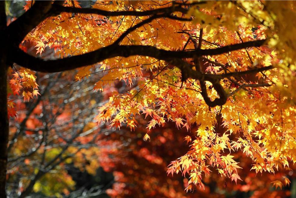 Thu vàng lộng lẫy của Hokkaido - gặp một lần đã là diễm phúc - Ảnh 2.
