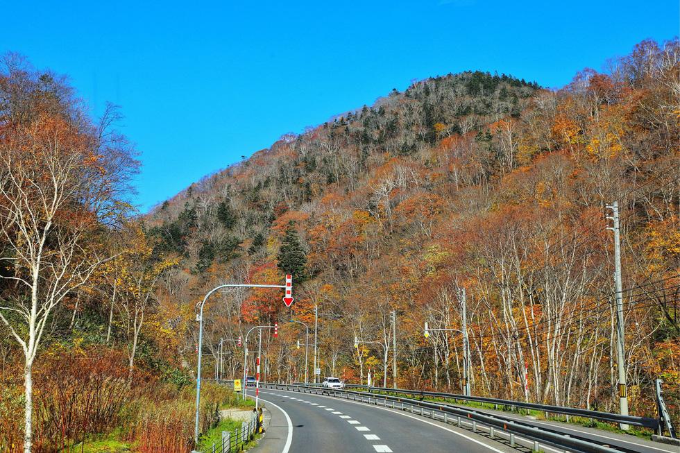Thu vàng lộng lẫy của Hokkaido - gặp một lần đã là diễm phúc - Ảnh 4.