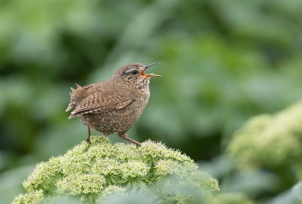 Học gì từ Chuyện kể về trăm loài chim - Ảnh 2.