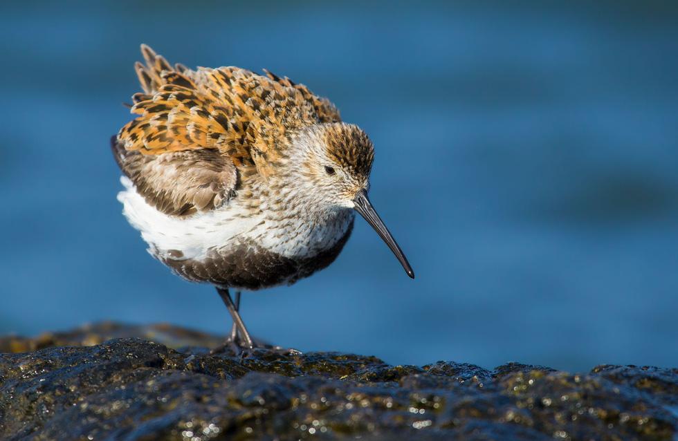 Học gì từ Chuyện kể về trăm loài chim - Ảnh 4.