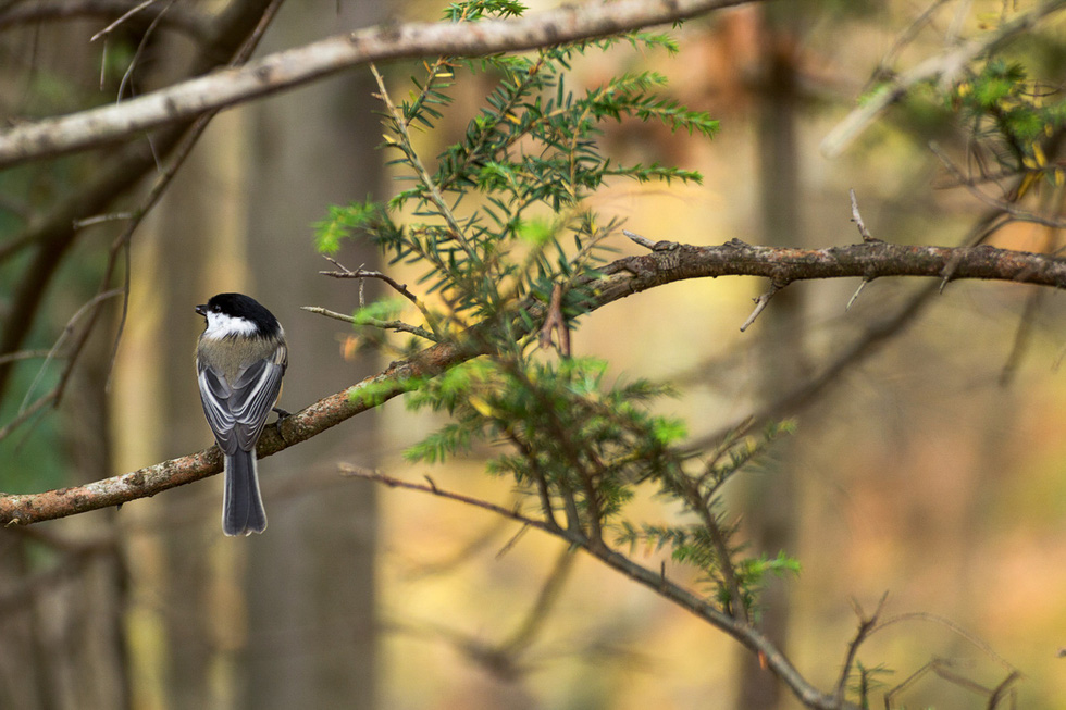 Học gì từ Chuyện kể về trăm loài chim - Ảnh 7.