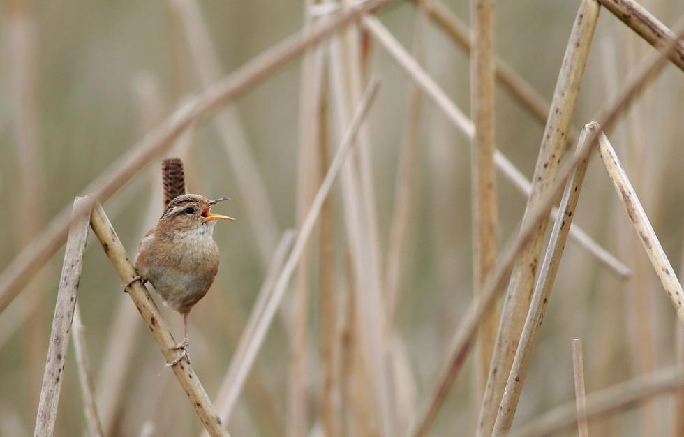Học gì từ Chuyện kể về trăm loài chim - Ảnh 8.