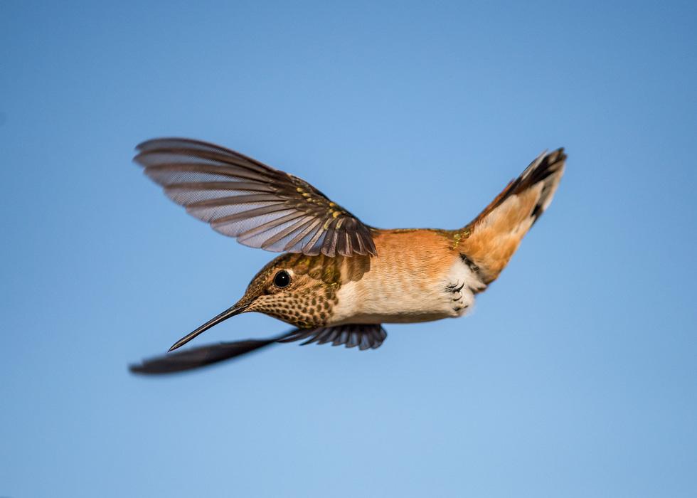 Học gì từ Chuyện kể về trăm loài chim - Ảnh 9.