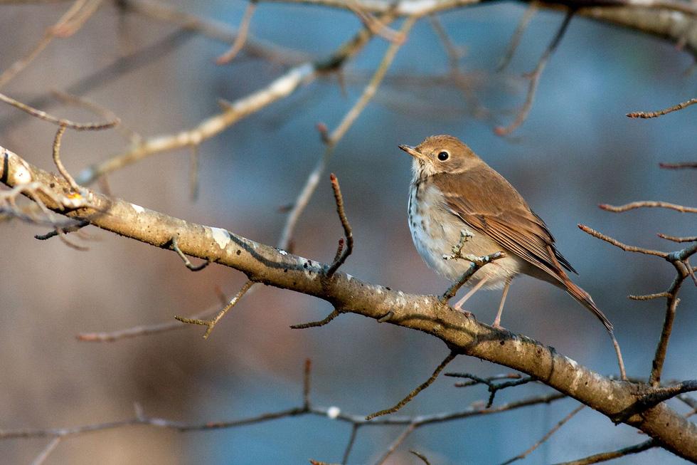 Học gì từ Chuyện kể về trăm loài chim - Ảnh 11.