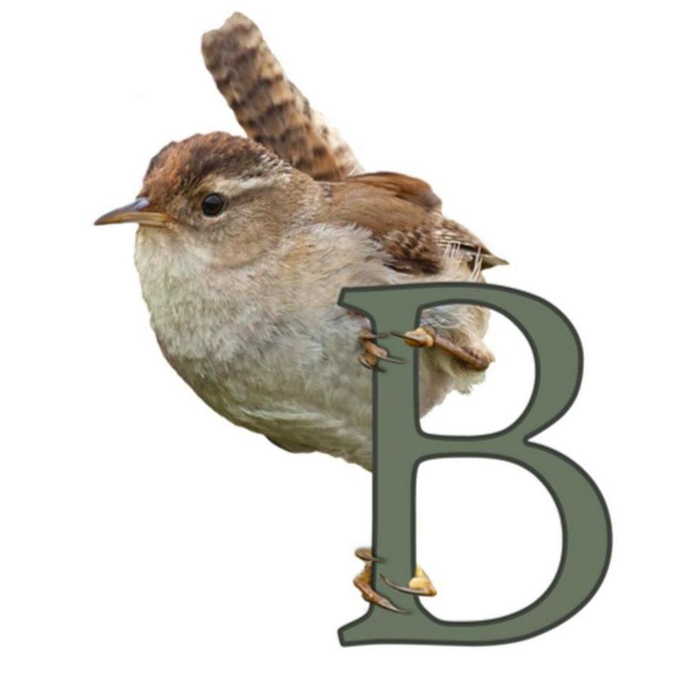 Học gì từ Chuyện kể về trăm loài chim - Ảnh 12.