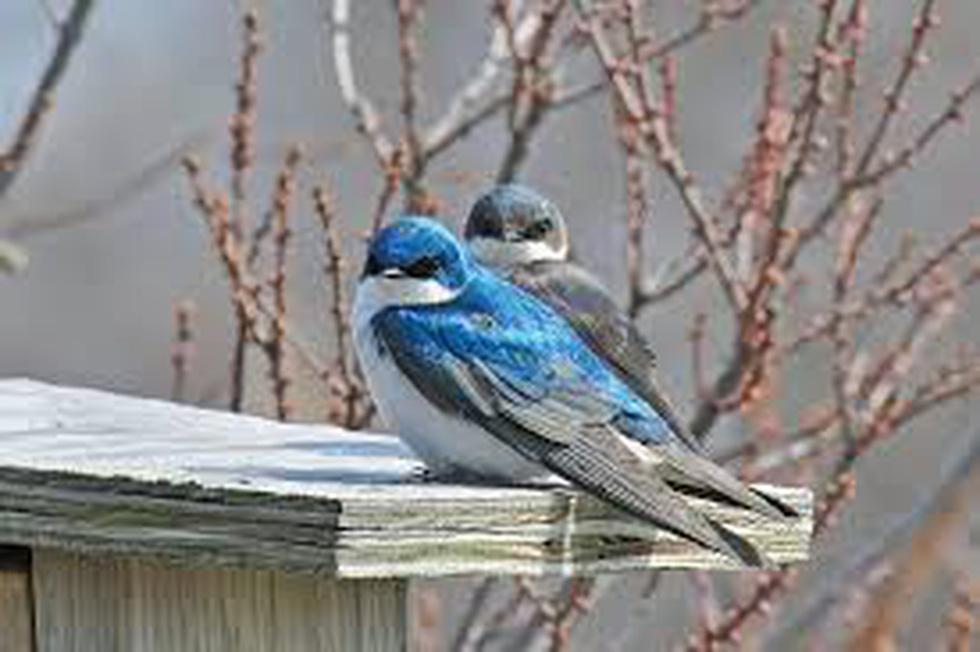 Học gì từ Chuyện kể về trăm loài chim - Ảnh 13.