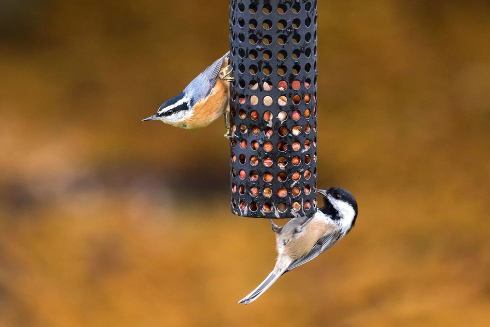 Học gì từ Chuyện kể về trăm loài chim - Ảnh 14.