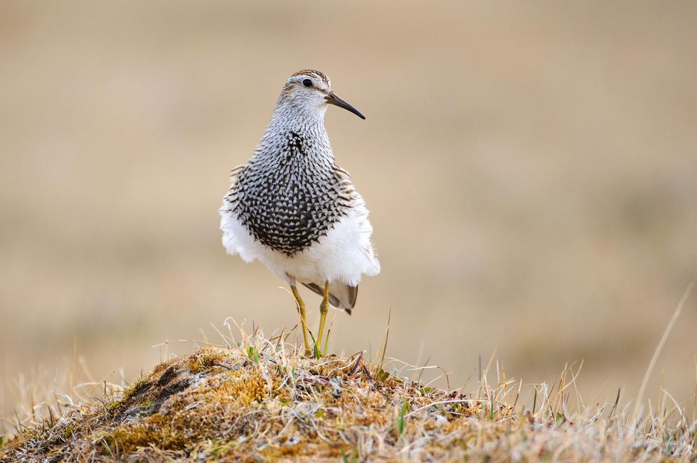 Học gì từ Chuyện kể về trăm loài chim - Ảnh 15.